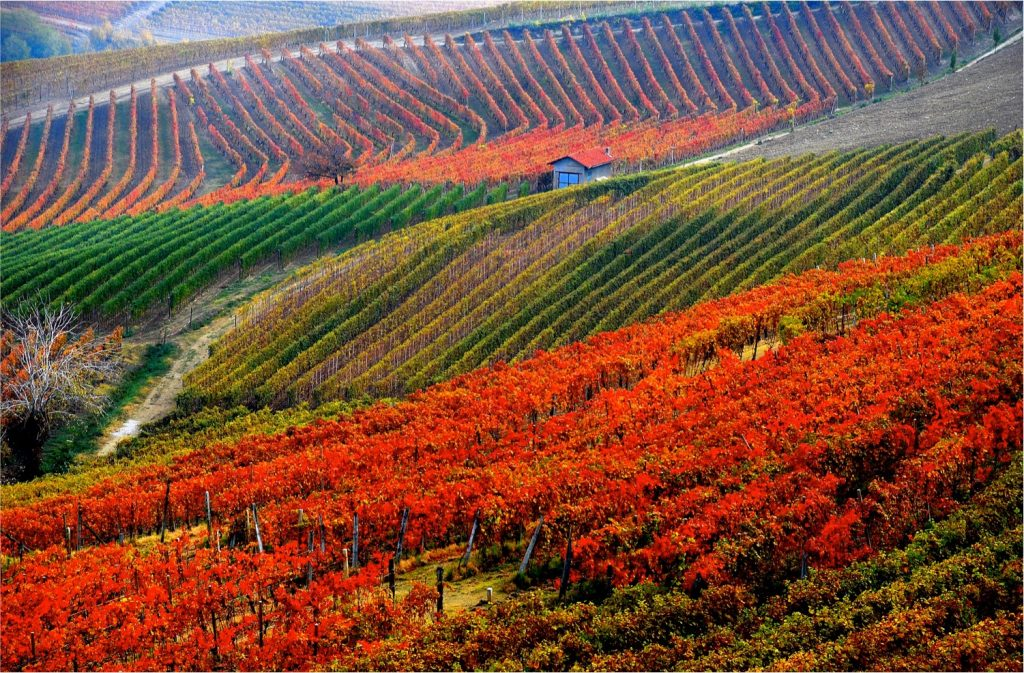 Langhe e Roero Piedmont Italy