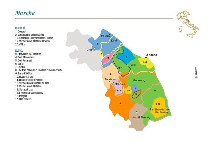 Le Marche Region wines